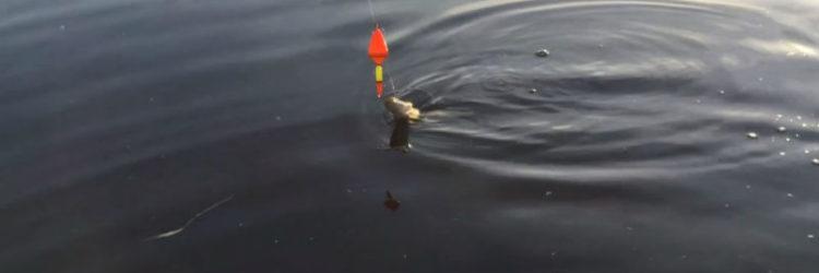 ловля рыбы на поплавок