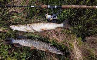 Как ловить щуку на поппер –  выбор снасти и приманки, особенности ловли