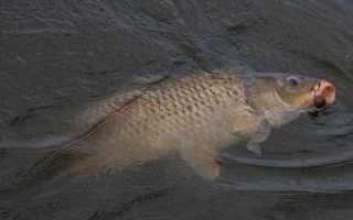 Рыбалка на карпа в апреле