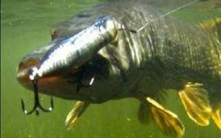 Как рыбачить на поппер