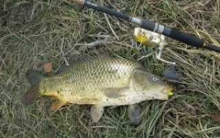 Рыбалка на карпа в октябре