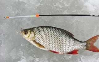 Рыбалка на сорогу зимой