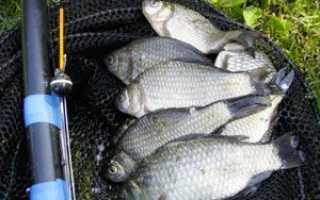 Рыбалка на карася в апреле