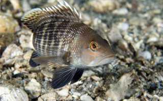 Рыбы Черного моря – подробное описание,разновидности, особенности питания и жизненного цикла