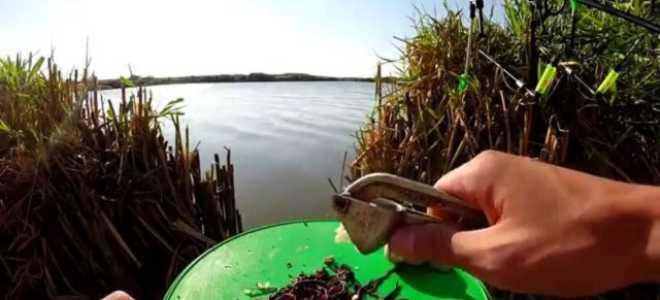 Как правильно ловить леща на червя