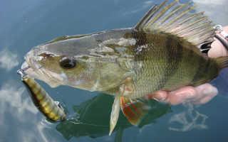 Ловля рыбы в марте