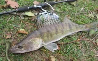 Рыбалка на судака в октябре