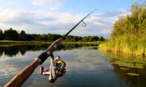 Как выбрать спиннинг начинающему рыболову