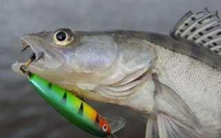 Воблеры для ловли судака – особенности, разновидности моделей серии, их параметры
