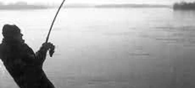 Какая нужна снасть на сома для ловли с берега, особенности использования фидера, закидушки, спиннинга