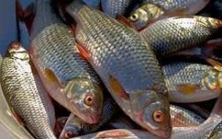 Рыбалка на плотву в апреле