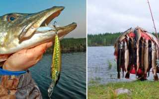 Как ловить щуку в октябре на спиннинг –  выбор снасти и приманки, особенности ловли