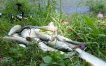 Рыбалка на хариуса в Красноярском крае: места и особенности