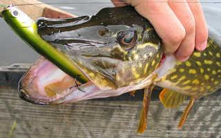 Ловля рыбы в августе